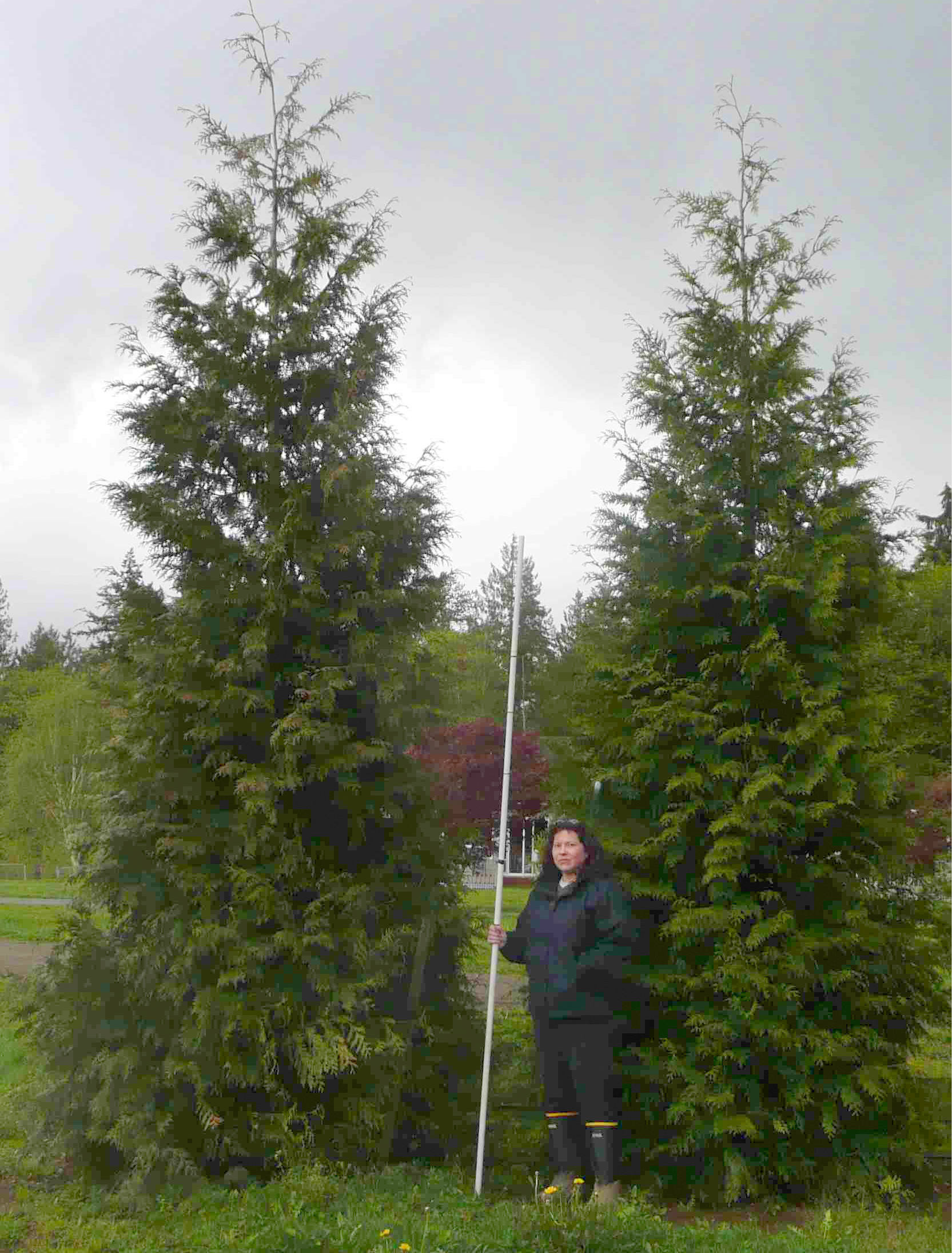How Fast Will My Thuja Green Giant Grow