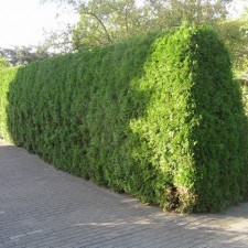 hedge with slope