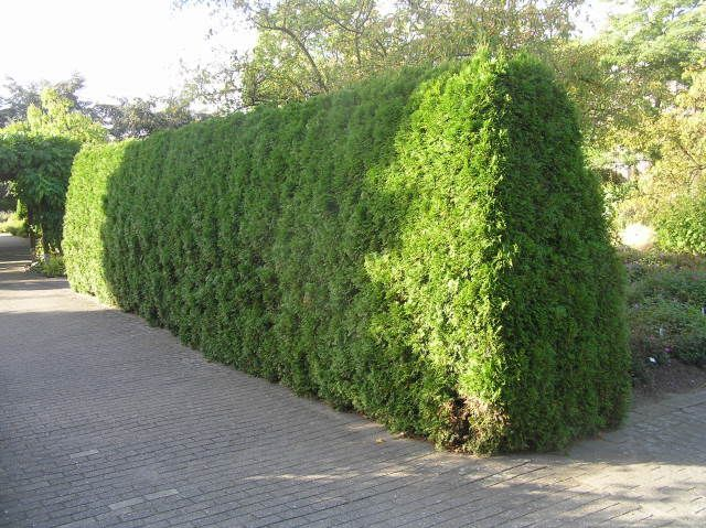 Keep Your Hedge Green to the Ground