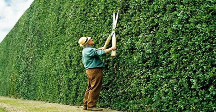 How to Choose a Hedge Trimmer – Part 1