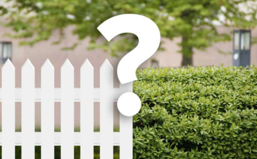 Thuja Green Giant and the 'Hedge or Fence?' Debate