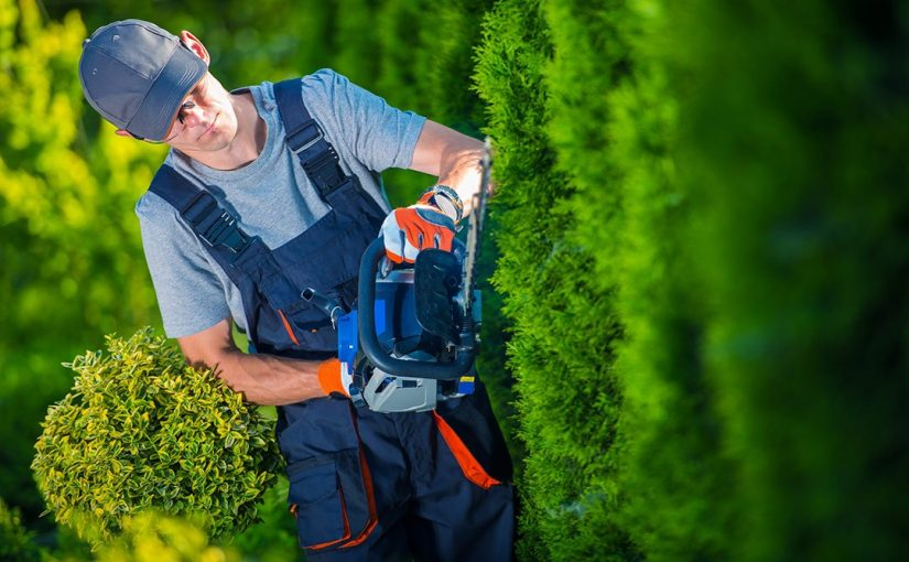 10 Top Tips on Trimming Evergreen Hedges