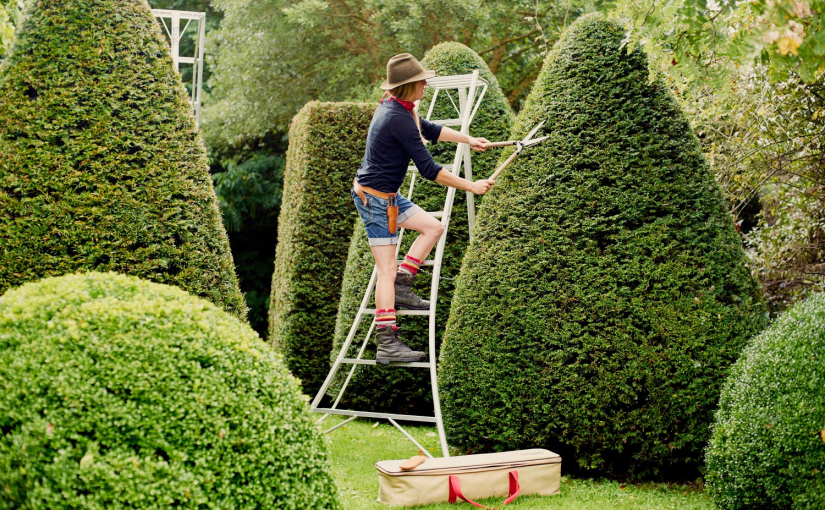 Ladders for Hedge Trimming – Tripod or Orchard Ladders